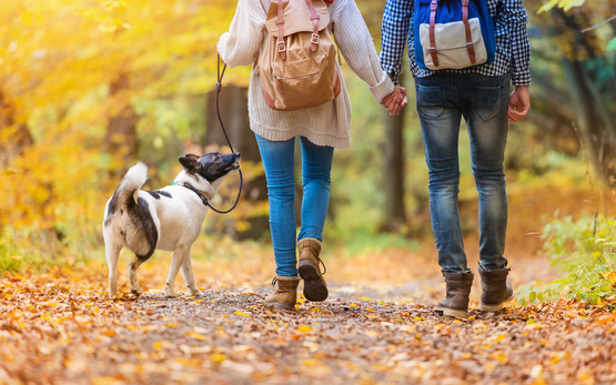 couple with dog in autumn